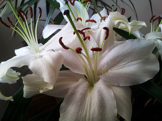 Lillies are the official flower of the 30th wedding anniversary.