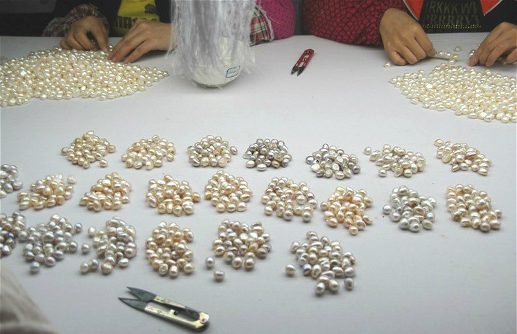 Freshwater cultured pearl grading