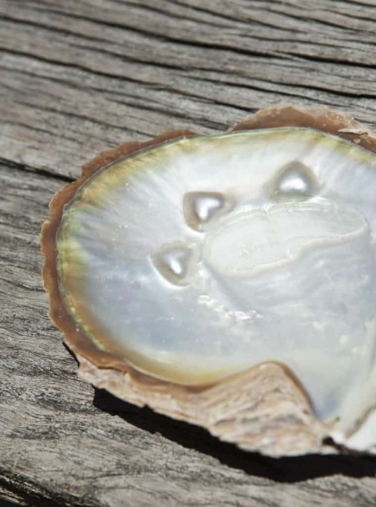 What is mother of pearl? How is it different from a pearl gemstone?