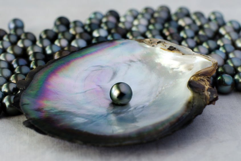 Black Cultured Pearl In Oyster S