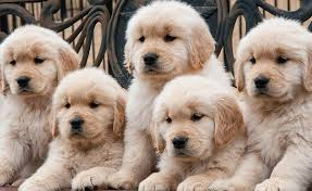 Celebrate National Puppy Day with Puppies