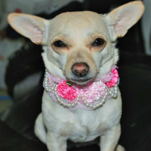 Floral Dogs Collar Pearl Necklace