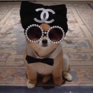 Pets and Pearls: Pearl Sunglasses for Dogs