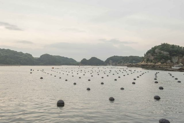The Process of Akoya Oysters Farming